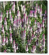 Flamingo Feather Flowers Canvas Print