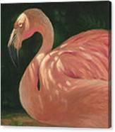 Flamingo In Dappled Light Canvas Print