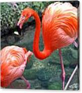 Flamingo River Walk Canvas Print