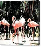 Flamingo Struts Canvas Print
