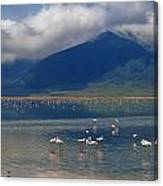 Flamingoes In Crater Lake At Ngorongoro Canvas Print