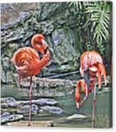 Flamingos Img 2897 Canvas Print