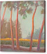Flanders Cornfield Canvas Print