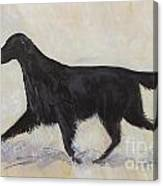 Flatcoat Retriever Canvas Print