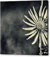 Fleur Jaune Canvas Print