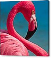 Flexible Flamingo Canvas Print