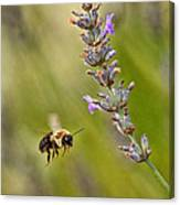 Flight Of The Bumble Canvas Print