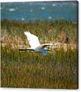 Flight Of The Egret Canvas Print
