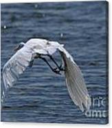 Flight Over The Lake 3 Canvas Print