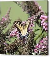 Flitter - Butterfly - Swallowtail Canvas Print