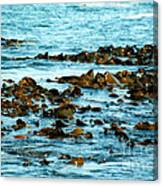 Floating Seaweed Canvas Print