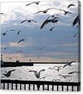 Flocking Gulls Canvas Print