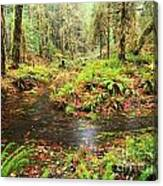 Flood In The Forest Canvas Print