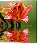 Flooded Lily Canvas Print
