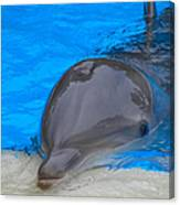 Published Secret Lives Dolphins Canvas Print
