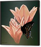 Floral Butterfly Dance Canvas Print