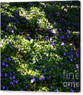 Floral Carpet Canvas Print