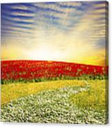 Floral Field On Sunset Canvas Print