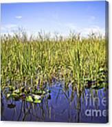 Florida Everglades 5 Canvas Print