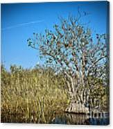 Florida Everglades 8 Canvas Print