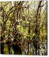 Florida Everglades 9 Canvas Print