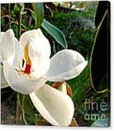 Florida Magnolia Canvas Print