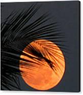 Florida Moonrise Canvas Print