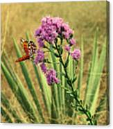 Florida Paintbrush Canvas Print
