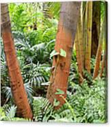 Florida Palms And Ferns Canvas Print