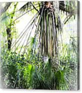Florida Palms Canvas Print