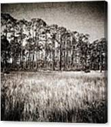 Florida Pine 2 Canvas Print
