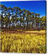 Florida Pine 3 Canvas Print
