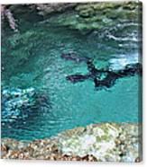 Florida Springs Cave Divers Canvas Print