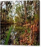 Florida Stream Canvas Print