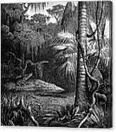 Florida: Swamp Canvas Print