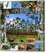 Florida Wildlife Photo Collage Canvas Print