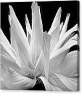 Flower 11 Canvas Print