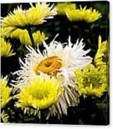 Flower 21 Canvas Print