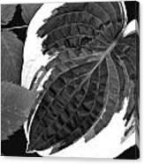 Flower 27 Canvas Print