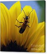 Flower And Bug Canvas Print