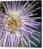 Flower And Spider Canvas Print