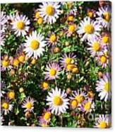 Flower Assault Canvas Print