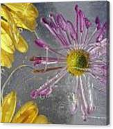 Flower Blossoms Under Ice Canvas Print