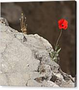 Flower By The Pool Of Bethesda - Israel Canvas Print