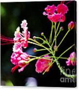 Flower Digital Painting Canvas Print