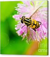 Flower Files On Flower Canvas Print
