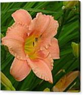 Flower In Pink Canvas Print
