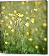 Flower Of A Buttercup In A Sea Of Yellow Flowers Canvas Print