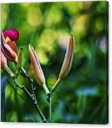 Flower Of Summer Canvas Print