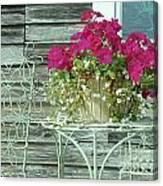 Flower Pots ...... 4 Canvas Print